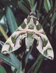 Das Foto zeigt eine Aufnahme eines Schmetterlings.