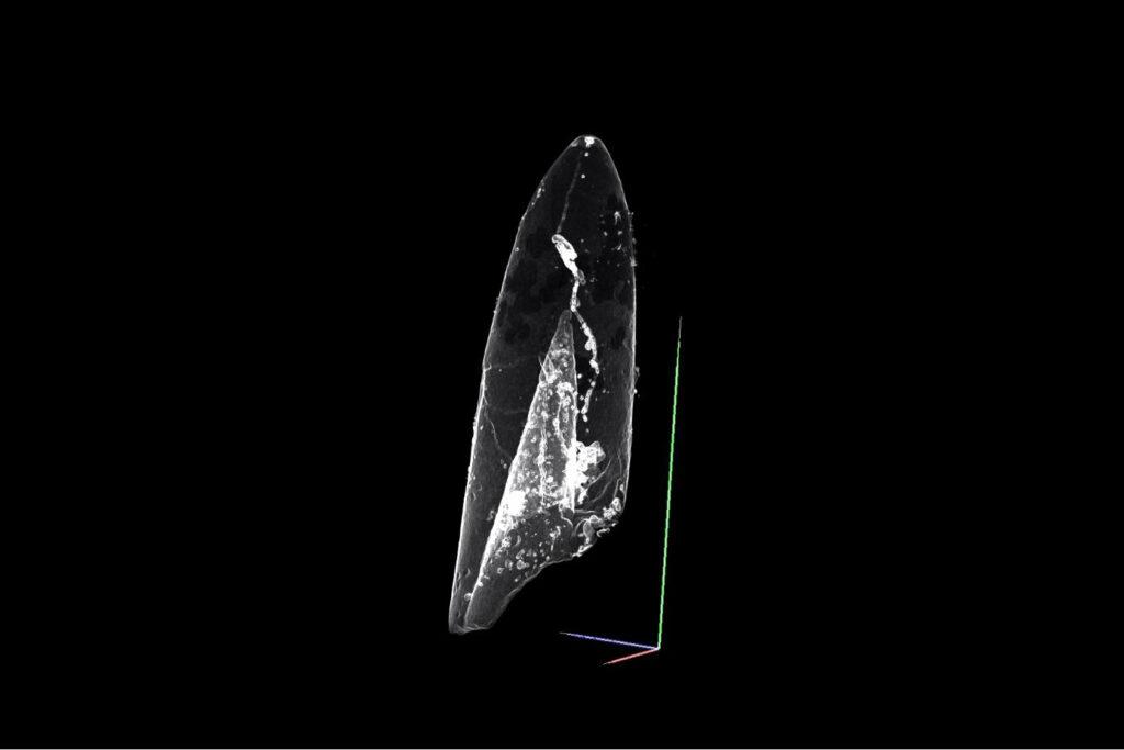 """ideoscreenshot: 3D-Rekonstruktion vom Belemnit """"Parapassaloteuthis zieteni"""" aus dem Untertoarcium von Buttenheim. Bildquelle: FAU/Patricia Rita"""