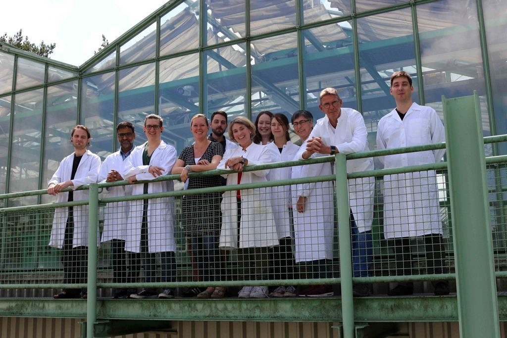 The team of researchers led by Prof. Dr. Uwe Sonnewald (2nd from right) hope to significantly increase the yield of the tropical cassava plant. (Image: FAU/Christine Hösl)